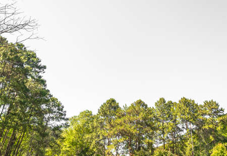 wilds: Landscape view of trees isolated on white background. Stock Photo