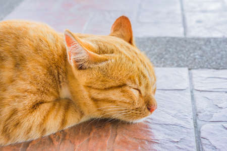 Pretty cat sleep in outside the house image. photo