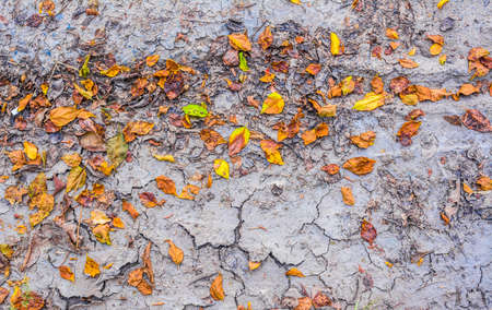 moulder: dry brown leaf on the cracked earth, Drought land. Stock Photo