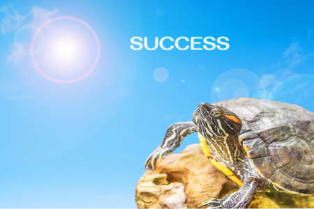 metaphor of  success with turtle and sun background. Stock Photo