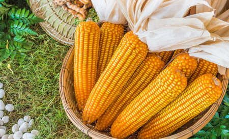 image of A basket of dry sweet corn . photo