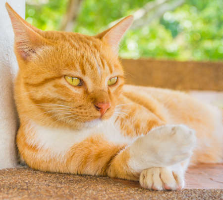 mood moody: image of moody cat on day time Stock Photo