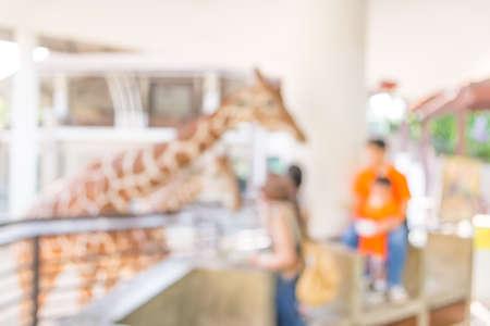 zoo: desdibujar la imagen de la muchacha de la jirafa en el Zoo Alimentación para el uso del fondo. Foto de archivo
