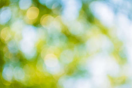 defocused: blur image of Abstract Bokeh of tree green color background.