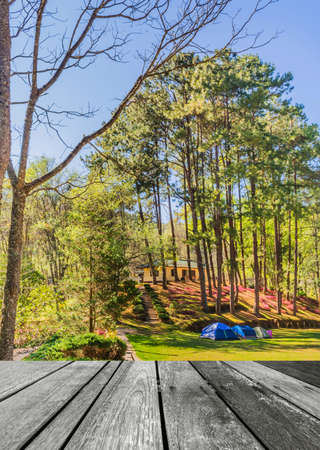 camping tent: image of Camping in the Forest .