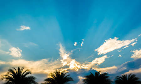 sun sky: image of silhouette palm tree and clear sky on day time.