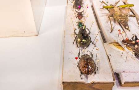 preserve: image of Collection of beetle butterfly wasps and insects with pin.