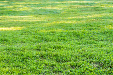 beeld van grasveld met dauw druppel op de ochtend tijd.