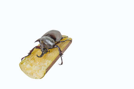 horn like: image of rhinocerous and sugar cane isolated on white background. Stock Photo