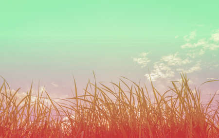 shiny day: silhouette shot image of Grass and sky in shiny day for background usage. Stock Photo