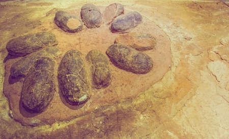 Afbeelding van ei fossiele dinosaurus op rotsachtergrond.