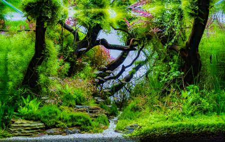 さまざまな水生植物の中に水槽のイメージを閉じます。
