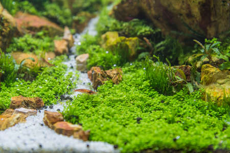 aquascaping: close up image of aquarium tank with a variety of aquatic plants inside.