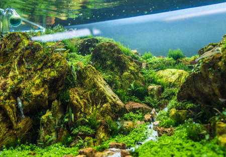 close up image of aquarium tank with a variety of aquatic plants inside.