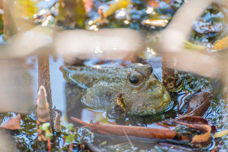 Image of Amphibious fish in mangrove forest on day time. Stock Photo