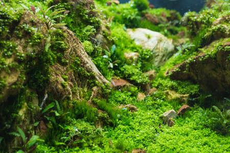close-up beeld van aquarium tank met een verscheidenheid van waterplanten binnen.