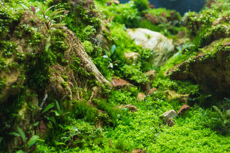 close up image of aquarium tank with a variety of aquatic plants inside. 版權商用圖片 - 76733309