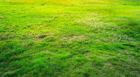 vintage tone image of green grass field on morning time for background usage.