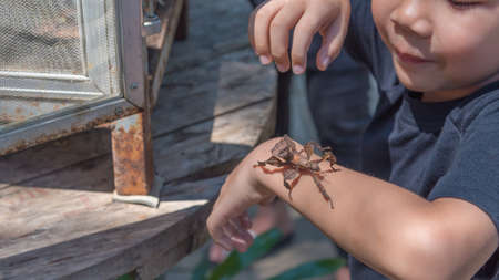 image of young asian boy have leaf insect on his hand.