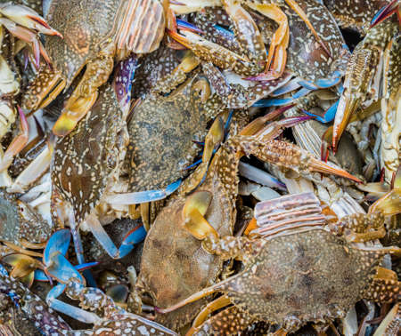 close up shot of blue swimming crabs .