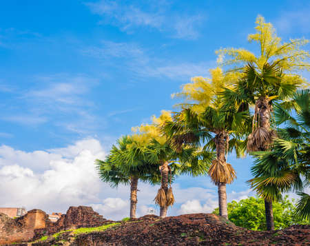 Image of fan palm tree on day time.