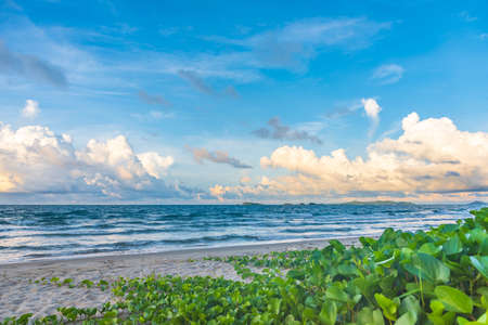 Image of a beautiful sand beach and blue sky with green goat's foot creeper (Beach Morning Glory) growing on sand.