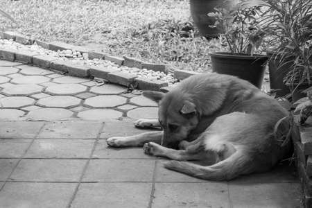 Black and white tone image of the stray dog beside the street in daytime