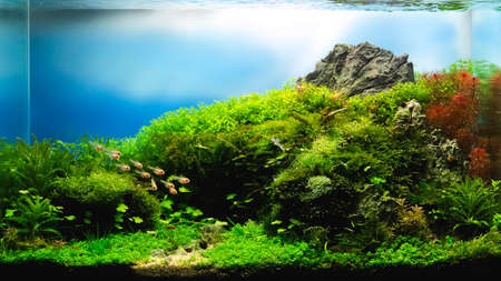 close up image of landscape nature style aquarium tank with a variety of aquatic plants inside. 版權商用圖片