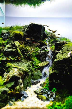 Nahaufnahme Bild des Aquariums im Landschaftsstil mit einer Vielzahl von Wasserpflanzen im Inneren. Standard-Bild