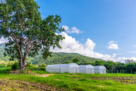 image of white insect protection tent in smart farm near green mountain.