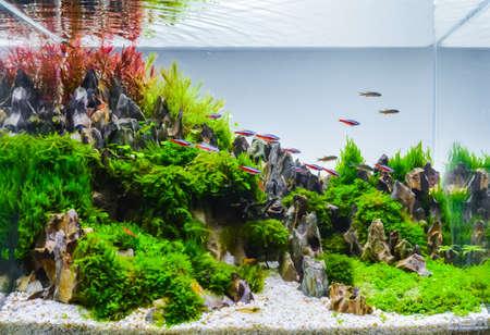 immagine ravvicinata del serbatoio dell'acquario in stile natura sottomarino con una varietà di piante acquatiche all'interno.