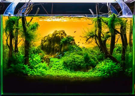 Nahaufnahme Bild der Unterwasserlandschaft im Naturstil Aquarium Tank mit einer Vielzahl von Wasserpflanzen im Inneren.
