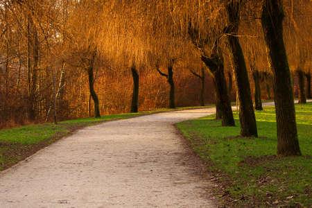 Beautiful autumn colors in park Stock Photo - 2563884