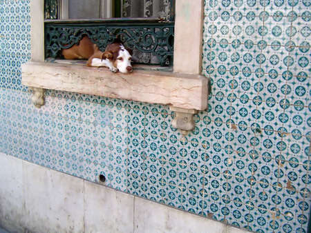 perro triste: Sad perro querer ir a un paseo  Foto de archivo
