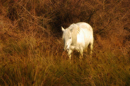 A photo realistic picture showing a white horse in the bushes photo