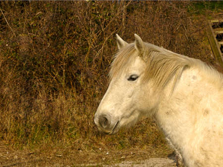 Portrait picture of a beautiful white horse photo
