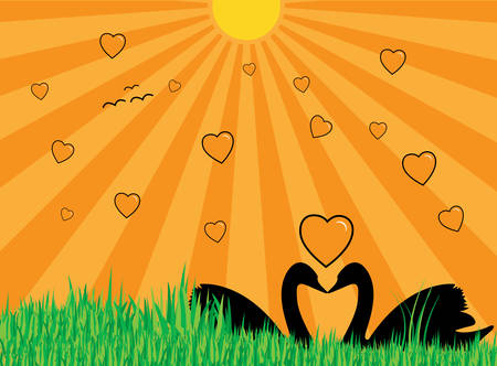 Illustration of two swans showing their silhouettes, many hearts, grass and sun with rays Vector