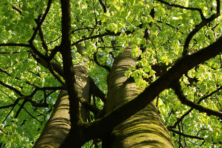 Looking up at a beautiful green colored tree Stock Photo - 3075475
