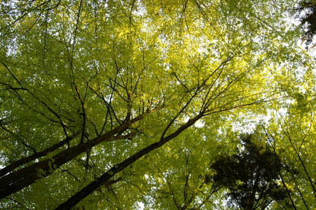 Looking up at a beautiful green colored tree Stock Photo - 3091980