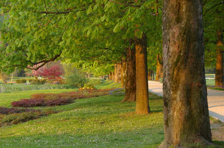Picture of a beautiful park with a row of trees on the left side of the picture. Stock Photo - 3100154