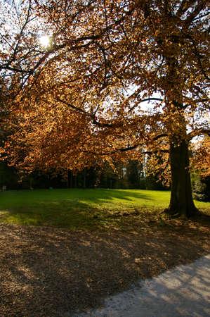 Beautiful tree with sun rays coming trough orange leafs. Stock Photo - 3109197