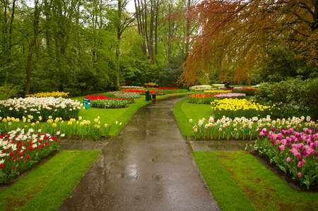 Picture of a beautiful park full of flowers (Keukenhof in the Netherlands). Stock Photo