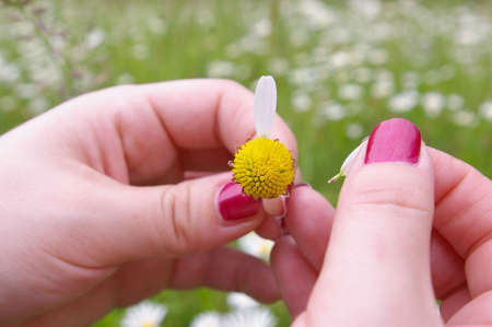 he: A girl playing He loves me, he loves me not by tearing off petals of a daisy
