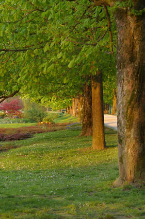 Picture of a beautiful park with a row of trees on the left side of the picture. Stock Photo - 3134037