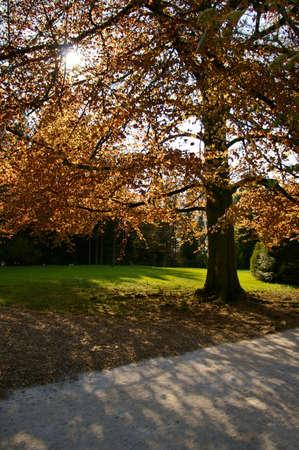 Beautiful tree with sun rays coming trough orange leafs. Stock Photo - 3144727