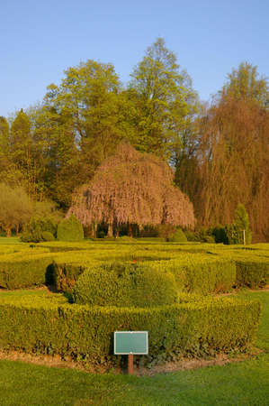 Picture of a green park with a beautiful tree Stock Photo - 3144725