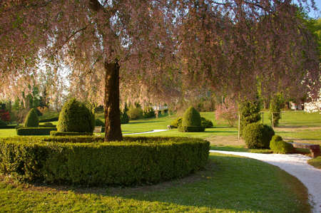 Picture of a green park with a beautiful path around a tree. Stock Photo - 3159975