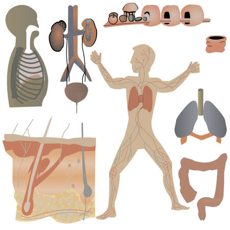 Physical Parts of the body Stock Vector - 28452594