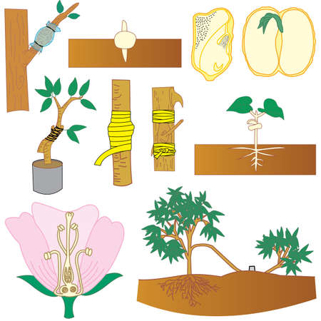Sowing, pruning branches, connections and tree breeding.