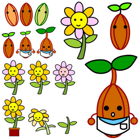 The growth of the flowers from the stems, seeds and flower petals  Illustration